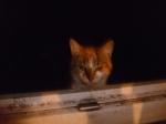 Il demande à entrer