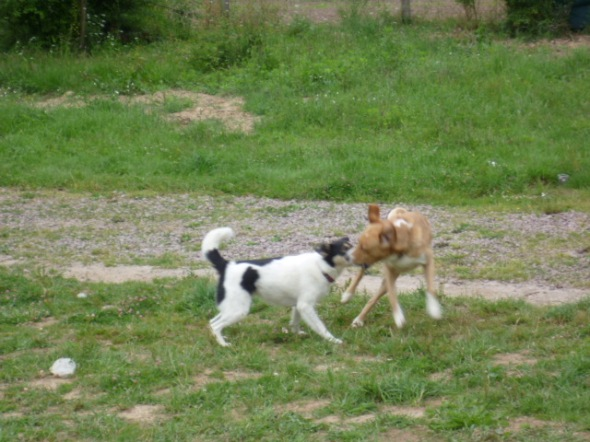 Seyko et ?? la petite chienne