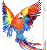 perroquets illustrations