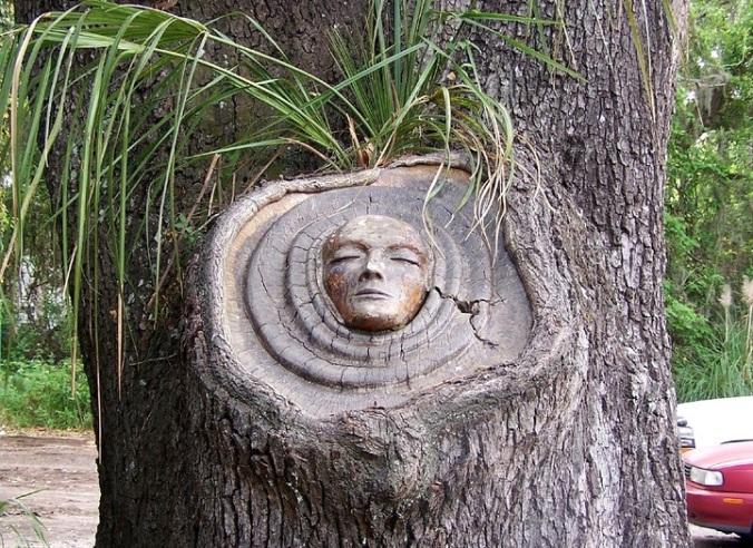 esprit de la forêt 6